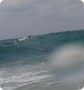 dolphinzoom